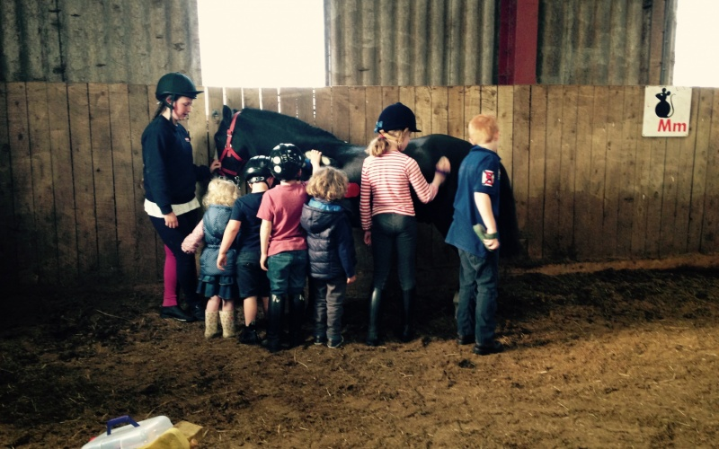 How long is pony Dandy... about 6 children long. Children at Wrea Green enjoy giving grooming a go